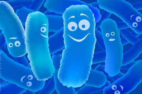 Men vi sinh và men tiêu hóa hoàn toàn khác nhau