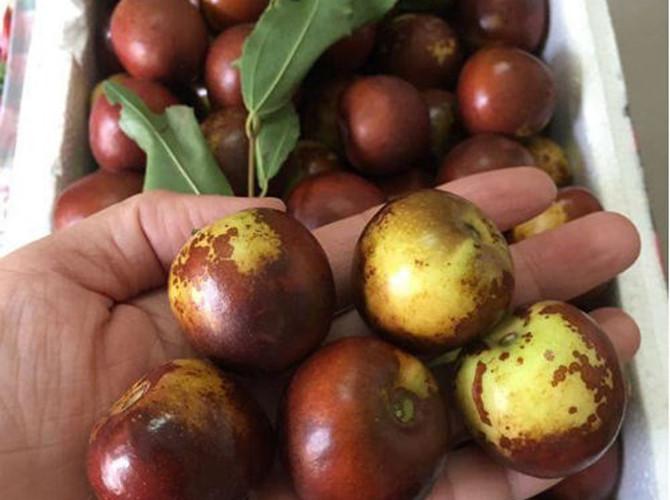 Quả hồng táo dược liệu tốt cho da