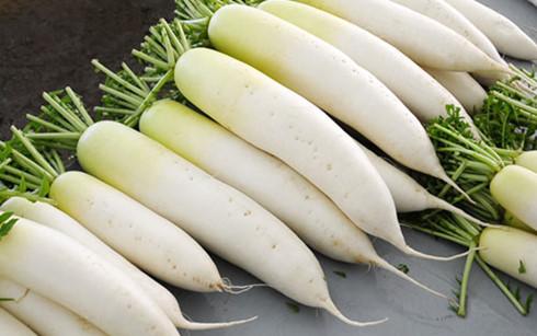 Củ cải trắng chữa bệnh rất tốt