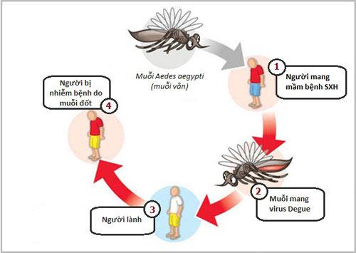 Muỗi vằn là nguyên nhân chính gây ra bệnh sốt xuất huyết